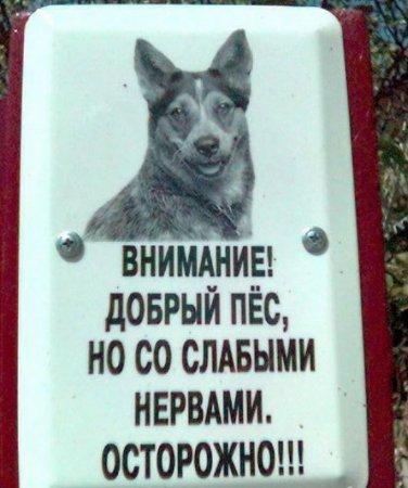 пес со слабыми нервами