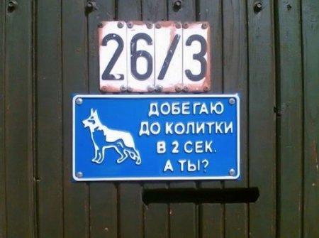 быстрый пес