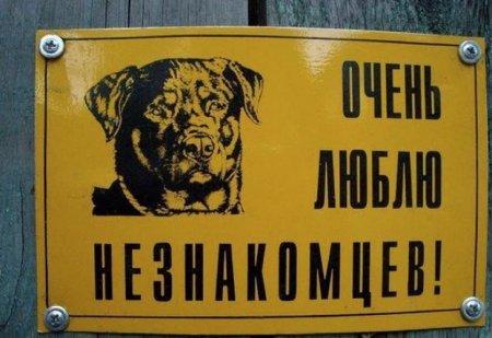 любвеобильная собака