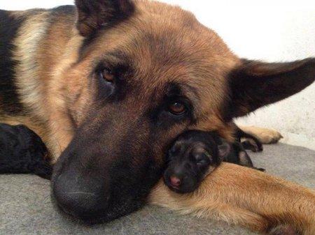 мама и ее дочка щенок