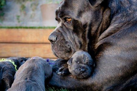 собака и ее щенята