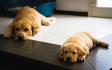 папа и его щенок