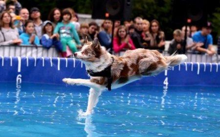 собака, которая ходит по воде