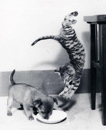 хитрый котяра