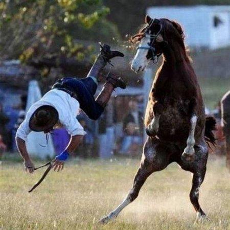 лошадь скинула человека