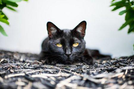 равнодушный кот