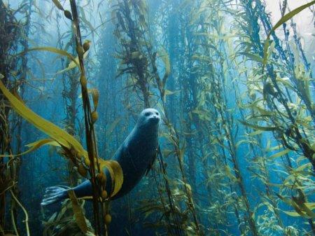 Любопытный тюлень, США
