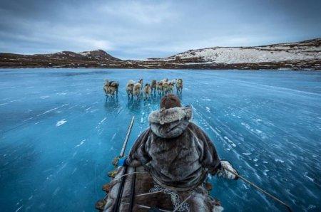 На собачьих упряжках в Гренландии
