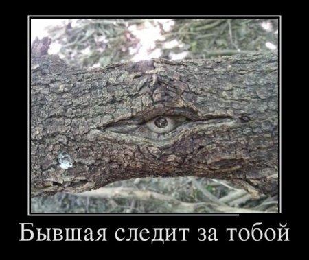 слежка