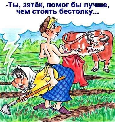 бык и красное