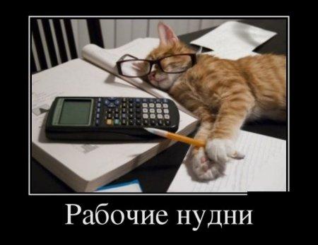 рабочие будни