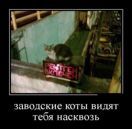 заводские коты