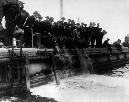 Пиво с содержанием градуса алкоголя выше допустимой нормы в 2,75% выливается в озеро Мичиган. 1919 год