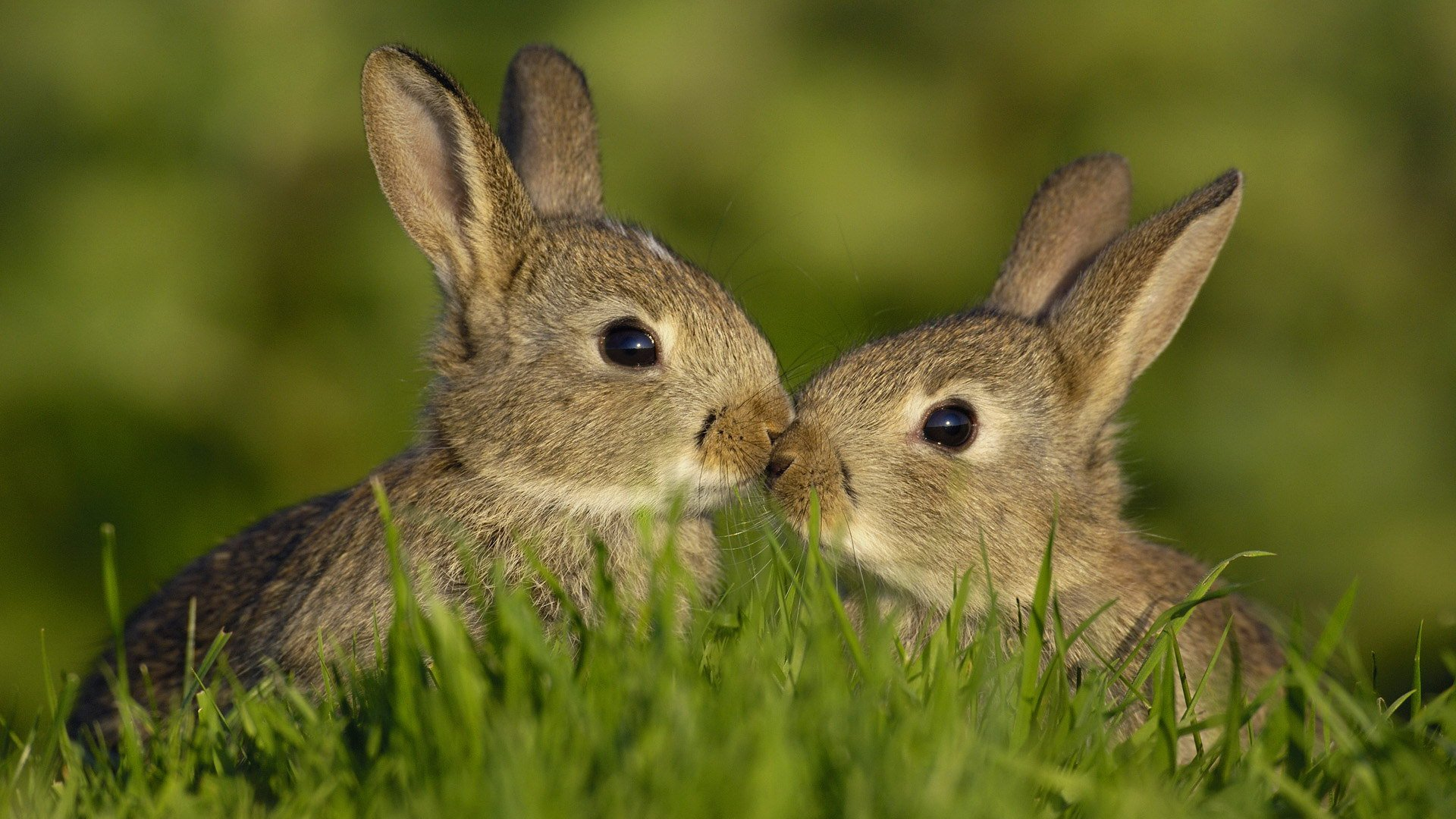 Милые кролики » 1000prikolov.com: приколы и ...: 1000prikolov.com/zhivotnye/5723-milye-kroliki.html