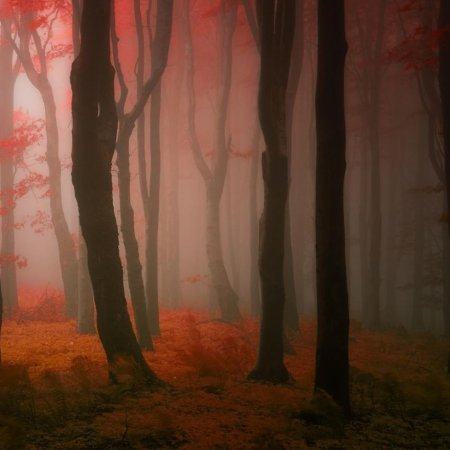 туман в красном лесу