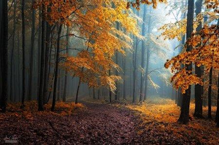 скрытые под листьями