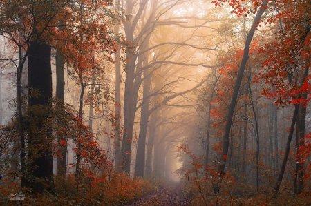 призыв леса