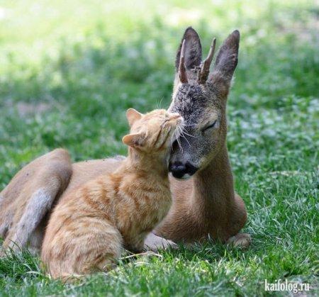 кот о олененок