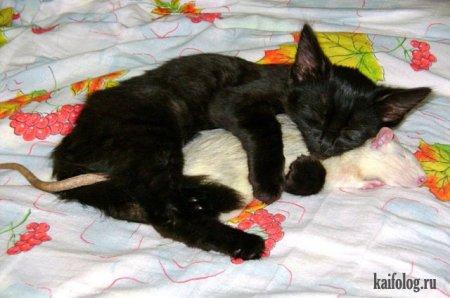 котенок и крыса