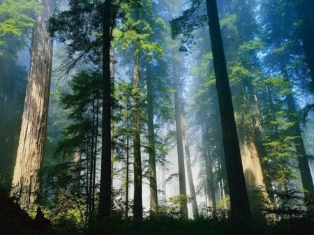 таинственный лес