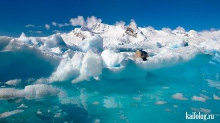 вечные льды