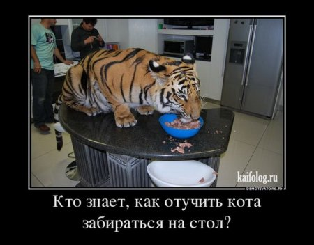 отучить кота