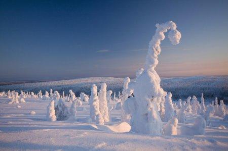 Замороженные деревья, Лапландия