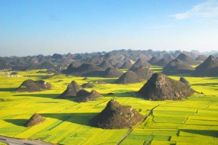 Рапсовые поля в Люпинге, Китай