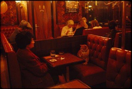 Хвостатый компаньон, Париж, кафе «У Людовика IX», 1988 год