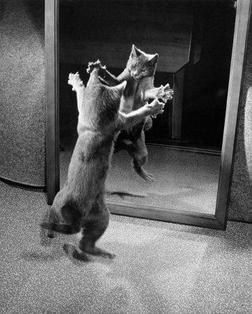 Котенок сражается с собственным отражением, 1964 год