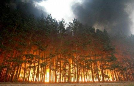 Лесной пожар, Россия (август 2010)