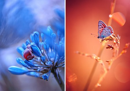 улитка и бабочка на цветке