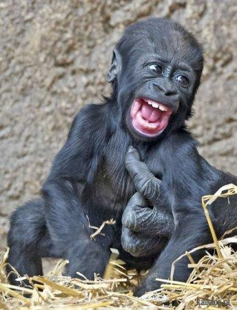 малыш обезьяны