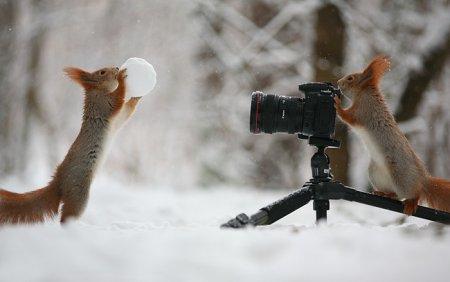 белки играют в снежки