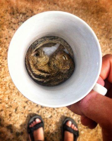 бельчонок в чашке