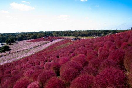 Приморский парк Хитати, Хитатинака, Япония