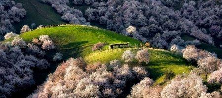 долина абрикосов
