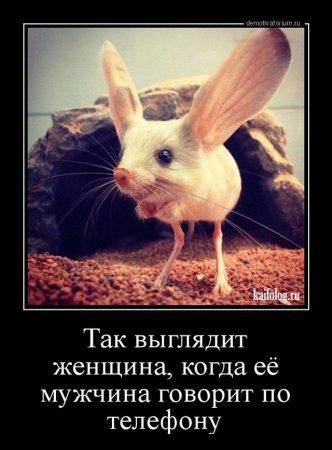 большие уши