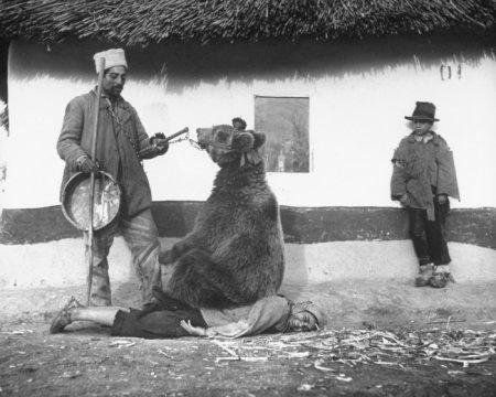 Лечение спины медведем. Румыния, 1946